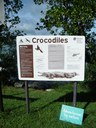 Crocodiles Cooktown  – Be croc wise