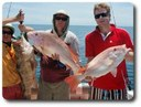 Cooktown Reef Charters